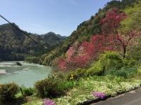 天竜川と花